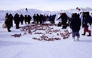 Inuit consume a diet of foods that are fished, hunted, and gathered locally